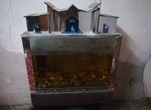 حوض سمك مع الميز والاغراض بسعر 75000 وبي مجال