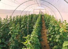 5فدان مزروعة بالكامل بجوار مشروع شباب الخريجين- 45دقيقة من القاهرة
