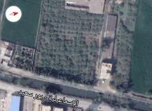 محافظة الشرقية مركز فاقوس أمام منشية أبو عبدون