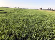 ارض زراعيه تابعه ل قرية كفر غنام مركز السنبلاوين  قابله لزراعة لجميع انواع المحاصيل