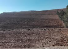 قطعة ارض للبيع شرقي جرش منطقة نادرة