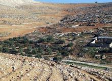 أراضي زراعي للبيع في منطقه عين والمعمريه ( بلعما)