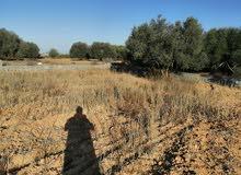 قطعة ارض في منطقة ماجر (طبطبت)