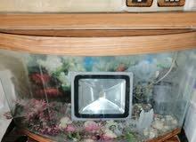 حوض سمك مع فلتر واحجار 10