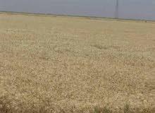 اراضي زراعية للبيع بالتقسيط 70 فدان بطريق اسيوط الغربى