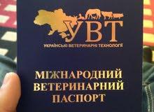 أنثى جيرمن وارد أوكرانيا