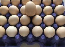 بيض دجاج فرنسي لاحم ملقح درجه أولى .