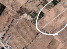 ارض للبيع / حسب المساحة المطلوبة من 3000 متر فما فوق