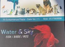 محل لبيع الحيوانات الاليفة ومستلزماتها