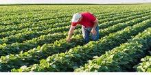 وداعا لغلاء أسعار الأراضى الزراعيه مزرعه للبيع 200 فدان بالاسماعيلية