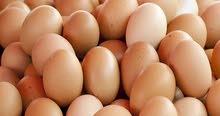 بيض احمر للفقاسات هندي