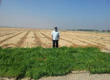 72 فدان اراضي زراعية كاملة الاوراق مسجلة بطاقة حيازة