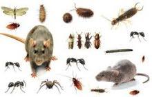 مببيد حشري لأبادة الحشرات والقوارض فورا