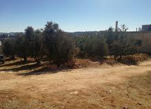 أرض للبيع  860م2 مشجرة مع بيت بالقرب من مثلث عبين صخرة.