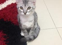 قطة 4 شهور