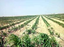 لمحبي الاستثمار الزراعي والإنتاج الحيواني والداجني قطعة ارض علي الاسفلت