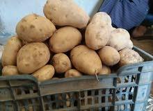 الزعيم لبيع اجود انواع البطاطس زهره درجه اولى للشبس