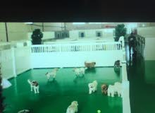 looking for investors in my pet shop and pets hotel