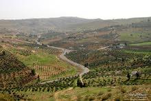 قطعة ارض للبيع مساحة 700 م في بيرين  قريبه من شفا بدران قوشان مستقل