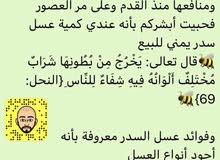 عسل سدر يمني اصلي