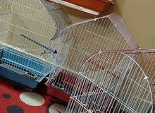 طيور بادجي ومستلزماتها