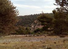 ارض للبيع في مرتفعات جرش مساحة 3,411 متر مربع