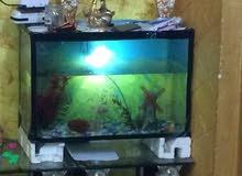 حوض سمك وأسماك للبيع