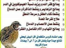 طير الفري