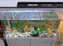 حوض سمك مجهز بشاشة رقمية  معلوماتية