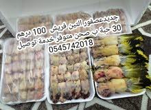 دفعة جديده عصفور التين 100 درهم خدمة التوصيل في جميع الإمارات للطلب  0545742018