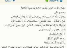 مشكل طيور البغبغاء/ 15 ريال / الدمام