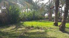 بيع أو مراوس بستان مثمره مساحتها خمسه دونم طابو بستنه سند ملكية منفصل