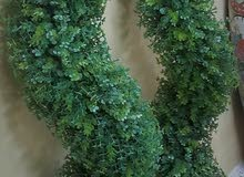 Order now Natural and Artificial Plants with high-end specs at a reasonable price