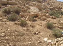 ارض 305م للبيع / حي معصوم / مقابل صالة الأفندر