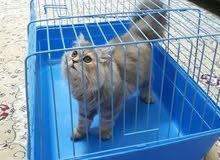 قطة 5 شهور