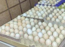 بيض عماني اصلي