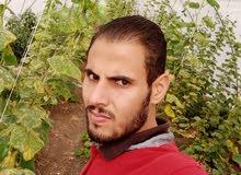 مهندس زراعي مصري يبحث عن عمل