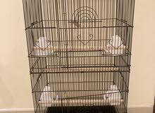 للبيع قفص طيور كبير  For sale big bird cage