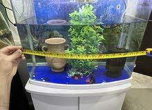 حوض سمك مع سمكتين