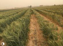 مزارع ابو غالب طريق اسكندريه الصحراوى