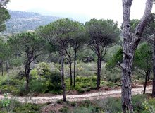 12900sqm land for sale