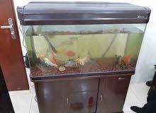 حوض سمك كبير نضيف جداا