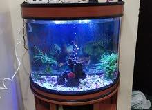 aquarium tank half round حوض سمك نصف دائري