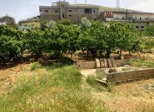 بيت مع ارض مزروعة للبيع