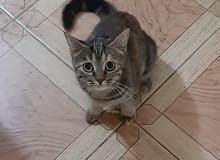قطة للتبنى لظروف السفر