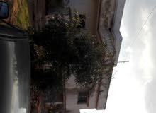 بيت للايجار المفرق حمامه قرب شارع جرش