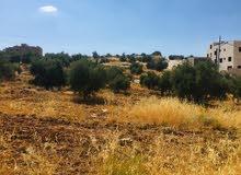 ارض للبيع في يعبد جنين 26 دونم