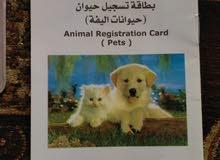 رخصة كلب للبيع