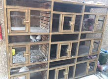 قفص + طيور للبيع