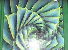 كتاب sat geometry للبيع